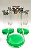 Emerald green: Cyanobacteria in culture. Photo: Nickelsen Group